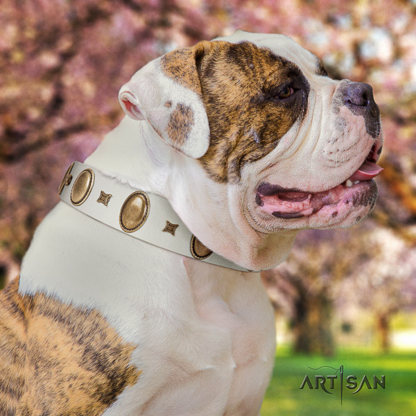 American Bulldog everyday use full grain leather collar with studs for your four-legged friend