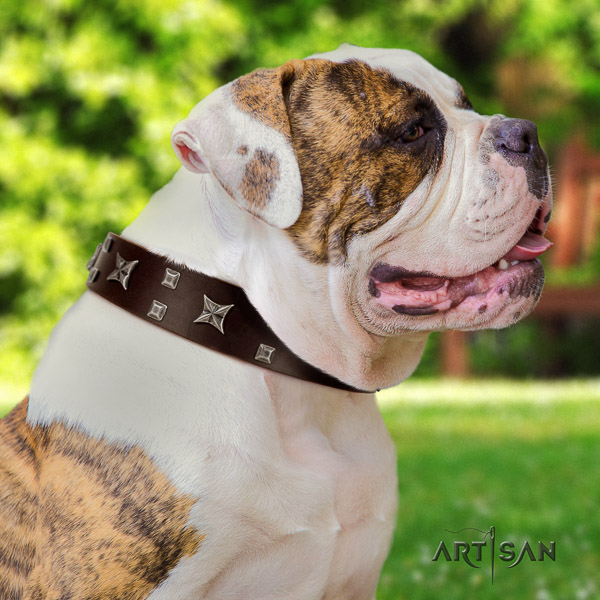 American Bulldog comfy wearing genuine leather collar with adornments for your four-legged friend