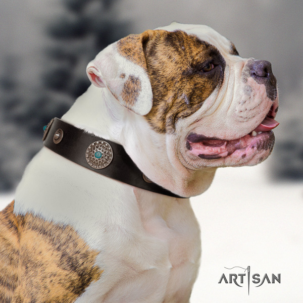 American Bulldog stylish walking full grain natural leather collar with studs for your dog