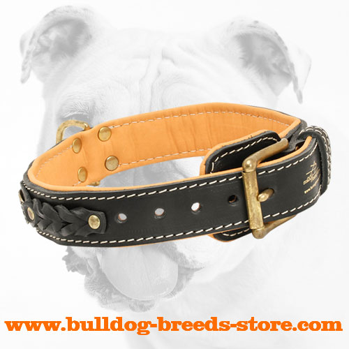 Strong Brass Fittings on Hand-Made Walking Leather Bulldog Collar