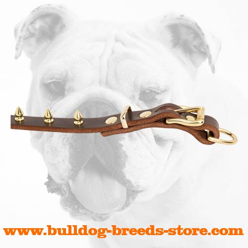 Brass Spikes and Fittings of Leather Bulldog Collar for Walking