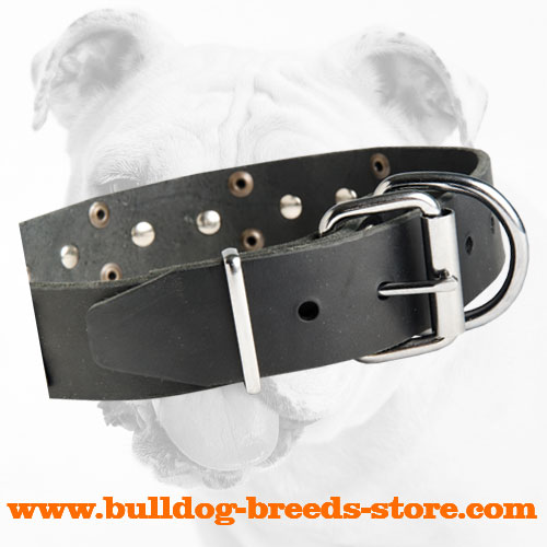 Buckle on Designer Walking Leather Bulldog Collar