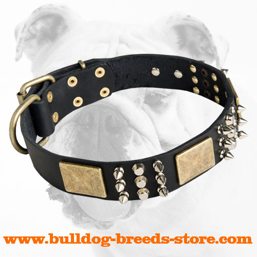 Leather Bulldog Collar with Nickel Studs, Spikes and Brass Plates