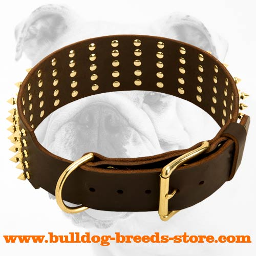 Gorgeous Leather Bulldog Collar with Brass Buckle