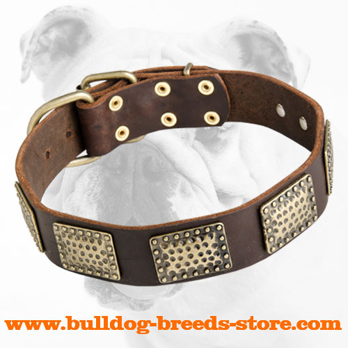 Walking Leather Bulldog Collar with Vintage Plates