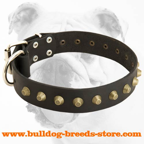 Gorgeous Wide Leather Bulldog Collar with Pyramids