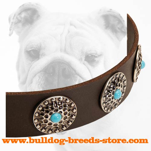 Nickel Circles with Blue Stones on Training Leather Bulldog Collar