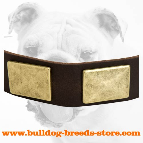 Brass Plates on Safe Walking Leather Bulldog Collar