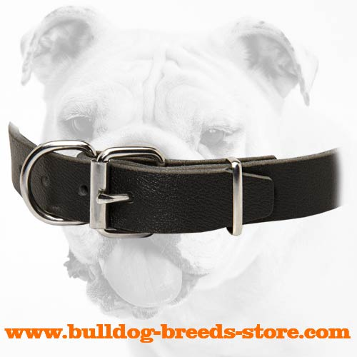 Nickel Plated Fittings of Leather Bulldog Collar