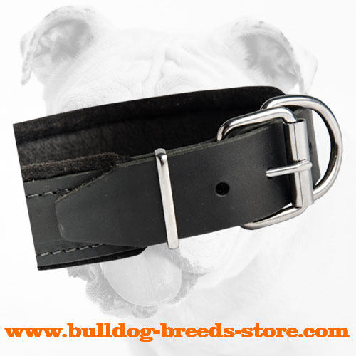 Reliable Fittings of Comfortable Padded Leather Bulldog Collar