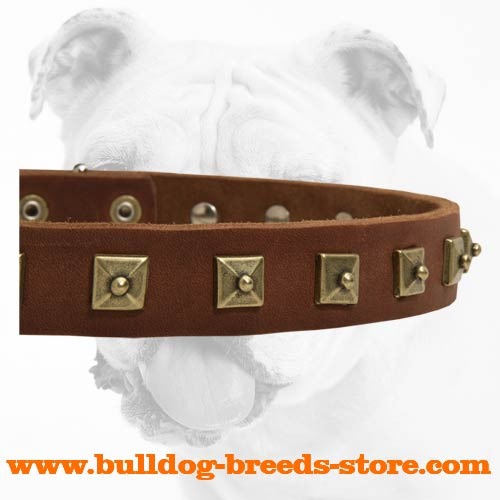 Square Studs on Decorated Leather Bulldog Collar