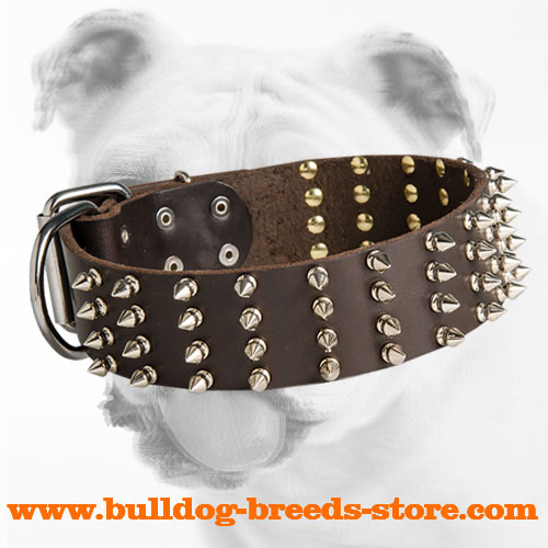 Designer Walking Spiked Leather Bulldog Collar