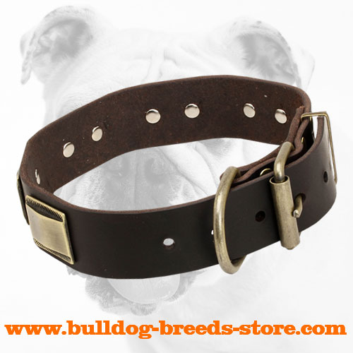 Leather Bulldog Collar with Brass Buckle for Handling