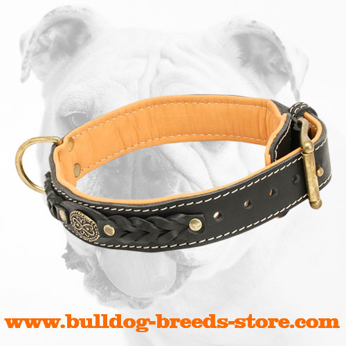 Nappa Padded Leather Bulldog Collar for Regular Training
