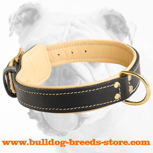 Soft Nappa Padded Leather Bulldog Collar with D-ring for Training