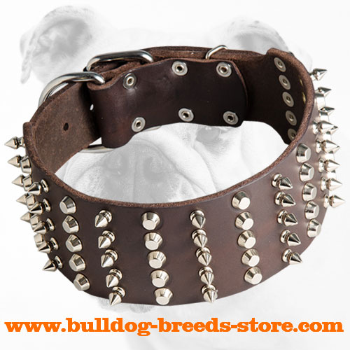 Spiked and Studded Walking Leather Bulldog Collar