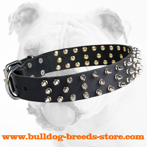Training Leather Bulldog Collar with Spikes