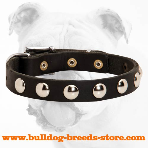 Training Studded Leather Dog Collar for Bulldog