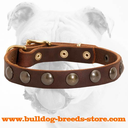 Stylish Training Studded Leather Dog Collar for Bulldog