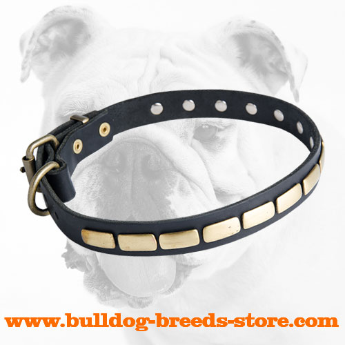 Fashionable Leather Bulldog Collar with Plates