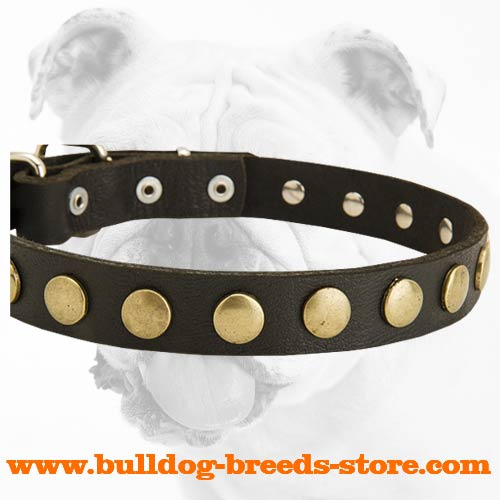 Superb Training Leather Dog Collar with Circles for Bulldog
