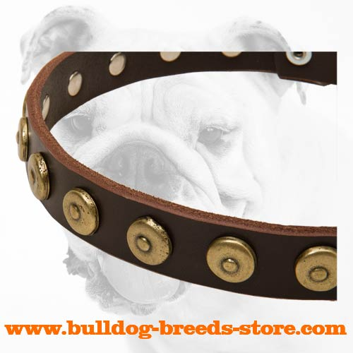 Superb Training Leather Dog Collar for Bulldog with Dotted Circles