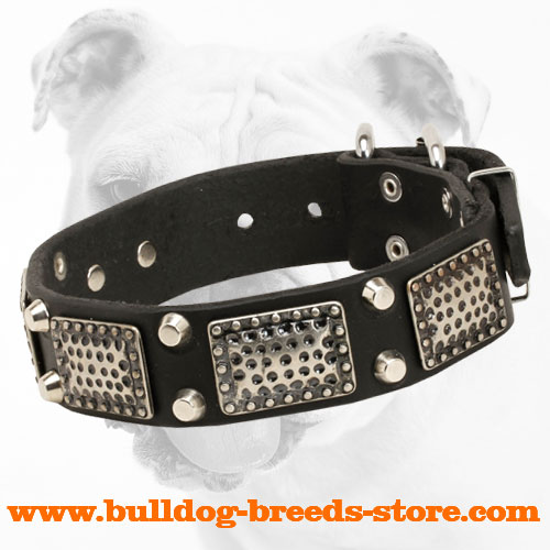 Hand-Decorated Training Leather Bulldog Collar with Plates and Cones