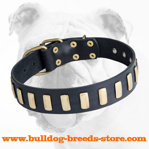 Stylish Training Brass Plated Leather Dog Collar for Bulldog