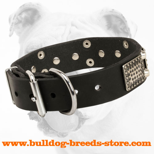 Walking Leather Bulldog Collar with Strong Buckle