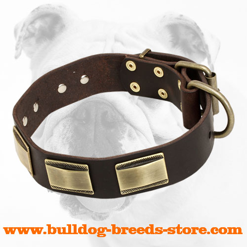 Stylish Walking Leather Bulldog Collar with Brass Plates