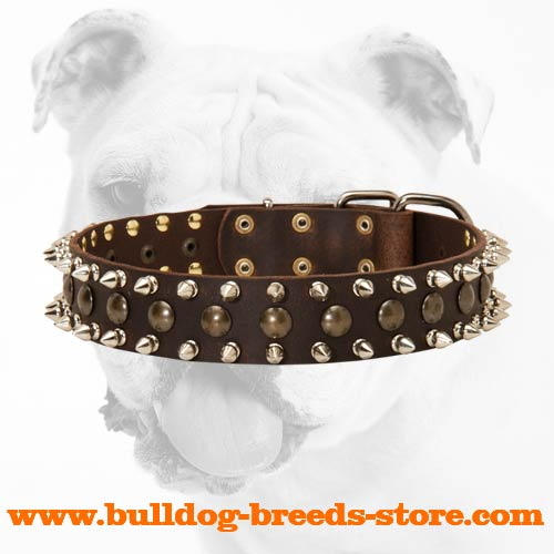 Stylish Walking Leather Bulldog Collar with Spikes and Studs