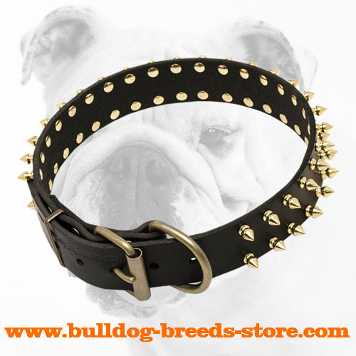 Stylish Walking Spiked Leather Bulldog Collar with Brass Fittings