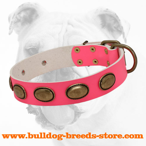 Pink Wide Walking Leather Bulldog Collar with Oval Plates