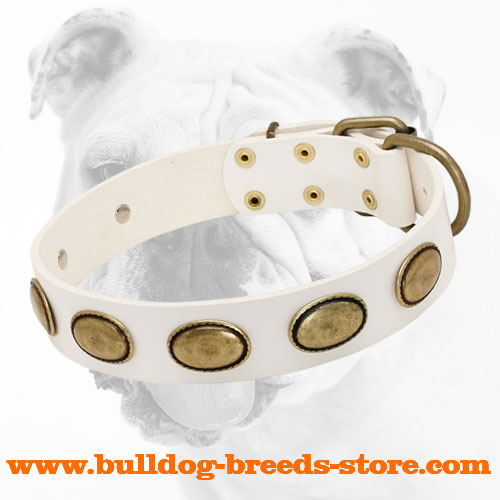 White Wide Walking Leather Bulldog Collar with Oval Plates