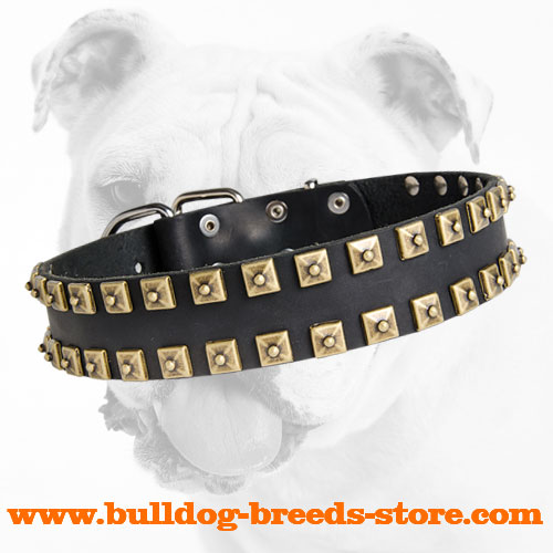 Wide Walking Leather Bulldog Collar with Studs