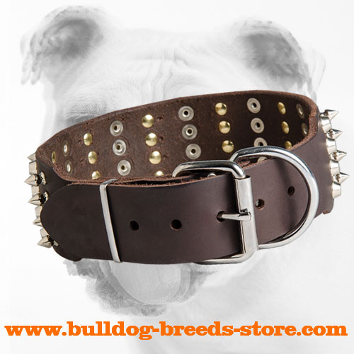 Stylish Leather Bulldog Collar with Nickel Plated Buckle