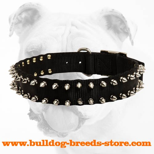 Lightweight Spiked Nylon Dog Collar for Bulldog Breeds