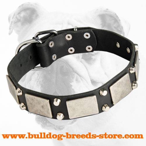 Fashion Training Leather Bulldog Collar with Studs and Plates