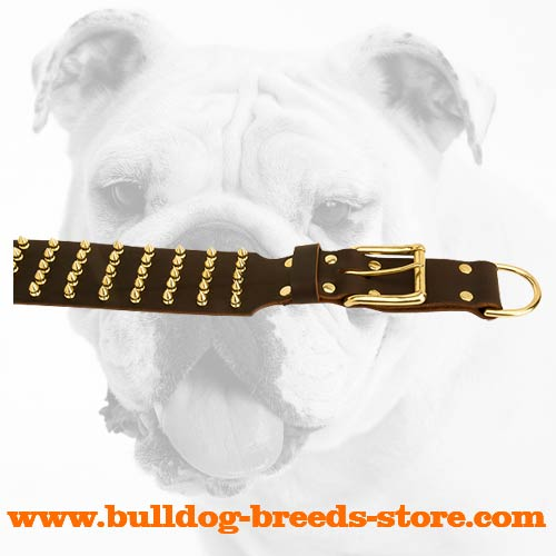 Brass Spikes and Buckle on Walking Leather Bulldog Collar