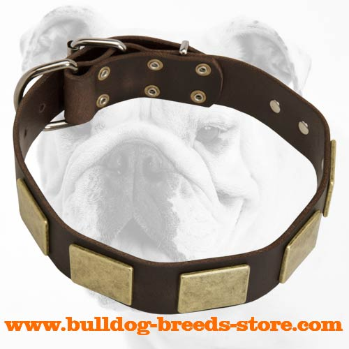 Training Leather Bulldog Collar with Brass Plates