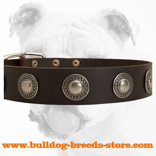Leather Bulldog Collar with Conchos for Stylish Walking
