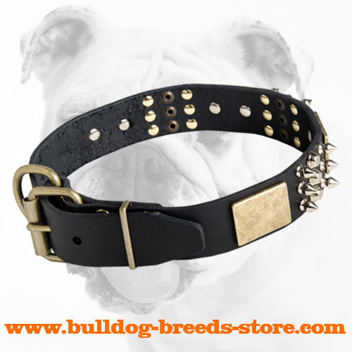 Stylish Leather Bulldog Collar with Studs, Spikes, Plates and Buckle