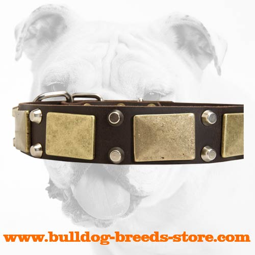 Studs and Plates on Walking Leather Bulldog Collar