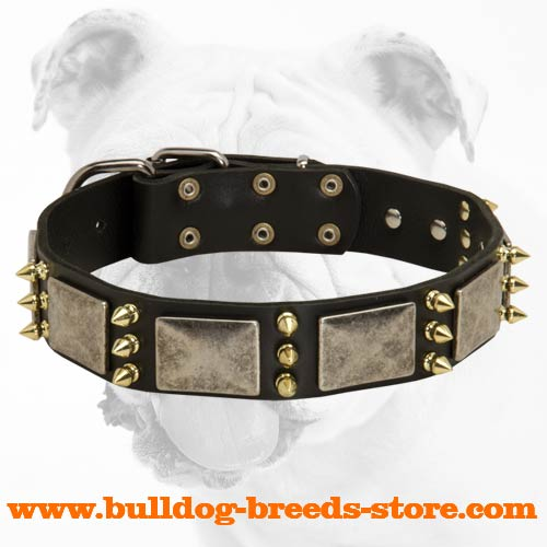 Stylish Leather Bulldog Collar with Nickel Plates and Brass Spikes
