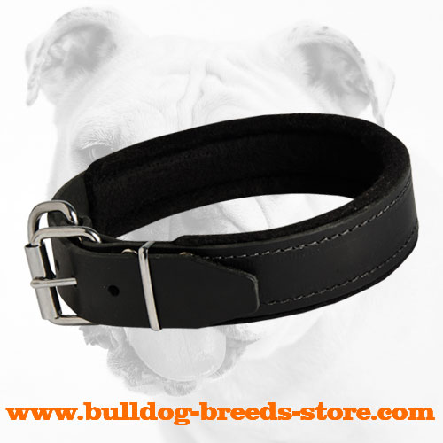 Agitation Training Padded Leather Bulldog Collar
