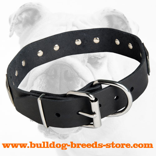 Stylish Leather Bulldog Collar with Strong Nickel Buckle