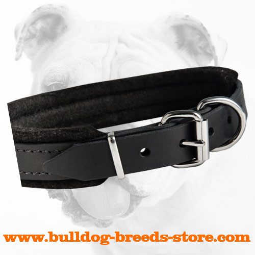 Soft Padded Walking Leather Bulldog Collar with Nickel Plated Buckle