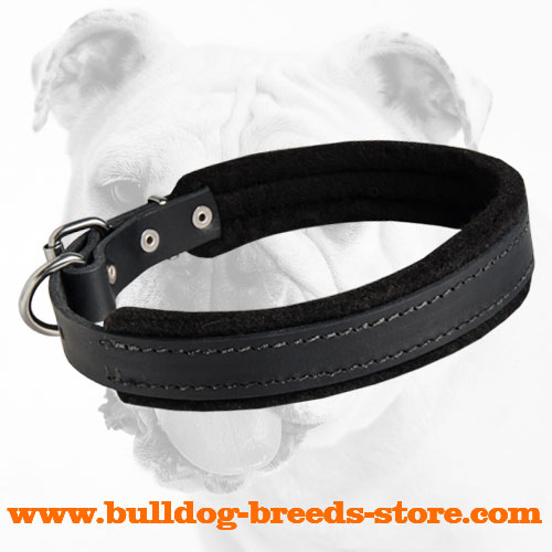 Bulldog Leather Collar for Training