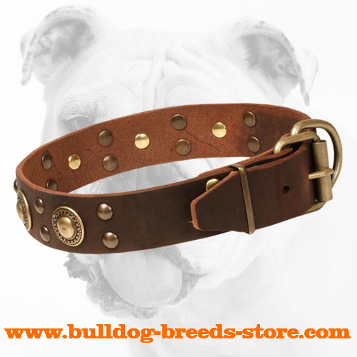 Durable Stylish Leather Bulldog Collar with Brass Hardware