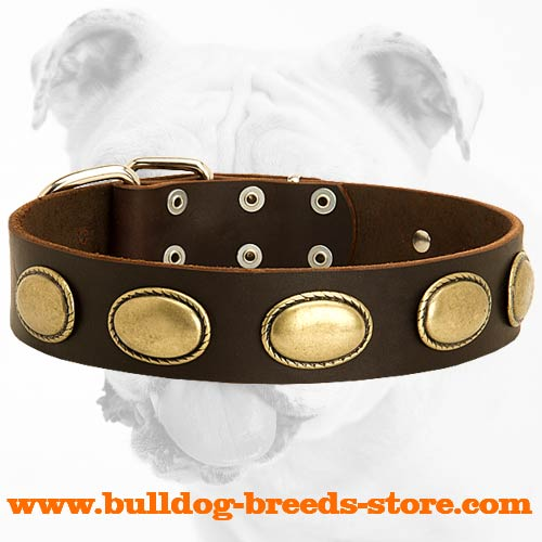Fashionable Walking Leather Bulldog Collar with Oval Plates